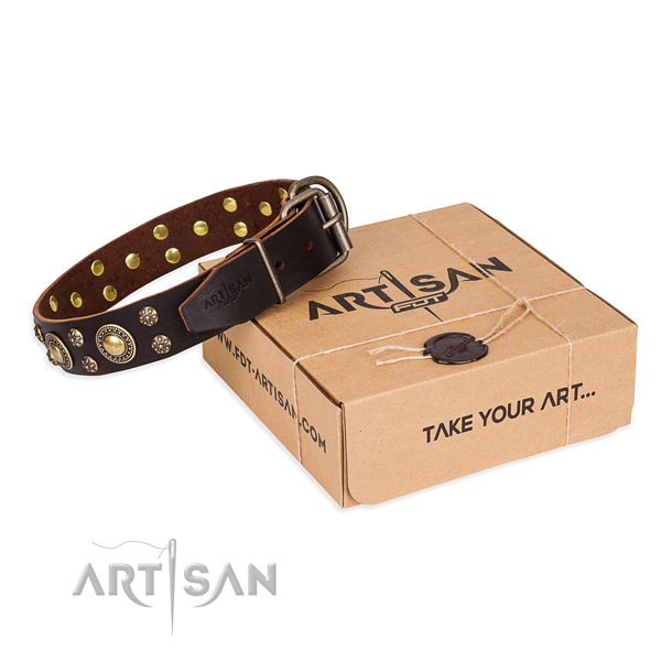 Stylish walking dog collar of reliable natural leather with adornments