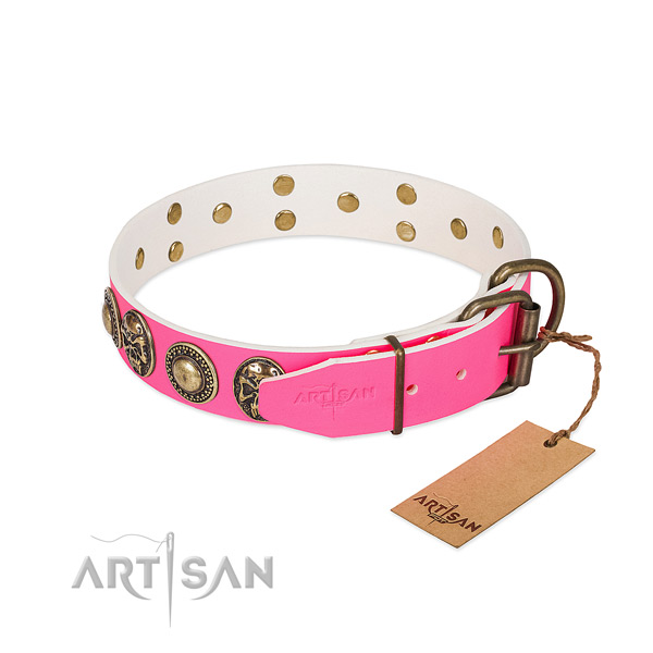 Corrosion resistant embellishments on daily walking dog collar