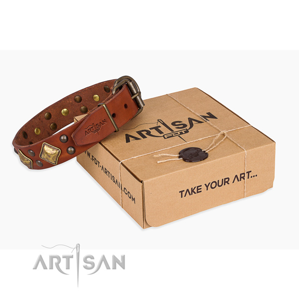 Everyday walking dog collar with Trendy rust resistant decorations