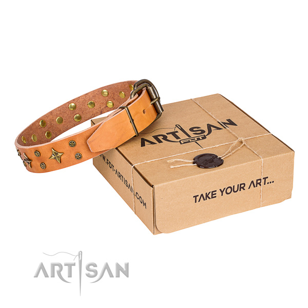 Walking dog collar of best quality full grain leather with studs