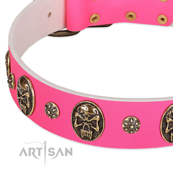 Top quality dog collar crafted for your handsome dog