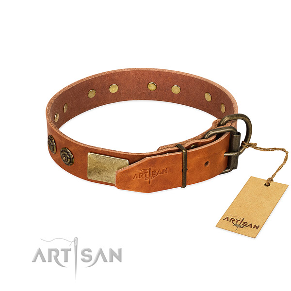 Corrosion proof traditional buckle on leather collar for walking your pet