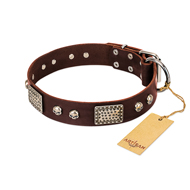 """Pirate Skull"" FDT Artisan Brown Leather Collie Collar with Old Silver Look Plates and Skulls"
