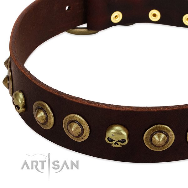 Remarkable embellishments on leather collar for your pet