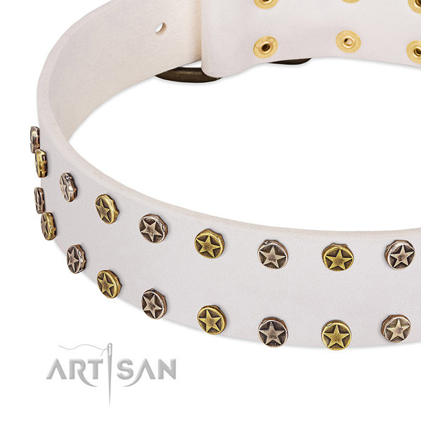 Unique studs on leather collar for your dog