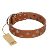 """Ancient Symbol"" Trendy FDT Artisan Tan Leather Collie Collar with Silver- and Gold-Like Studs"