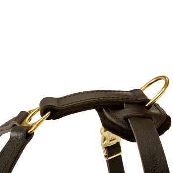 Corrosion Resistant D-ring of Collie Harness
