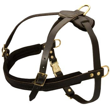 Leather Collie Harness for Dog Off Leash Training