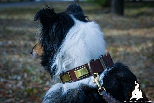 Collie leather leash with rustless brass plated hardware for any activity