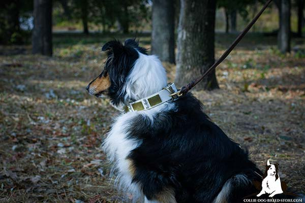 Collie leather leash with non-corrosive hardware for basic training
