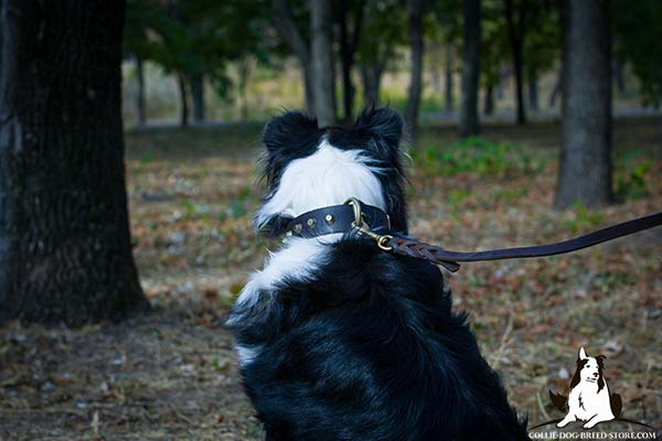 Collie leather leash with rust-resistant hardware for safe walking