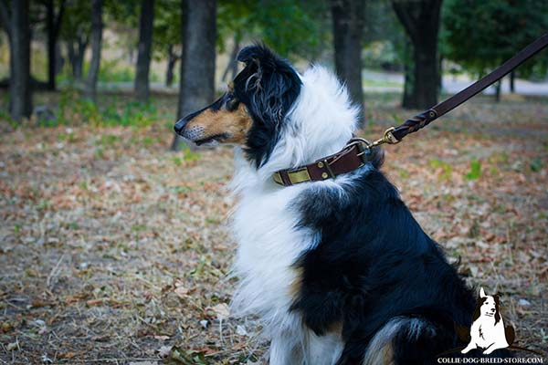 Collie leather leash with durable brass plated hardware for better comfort