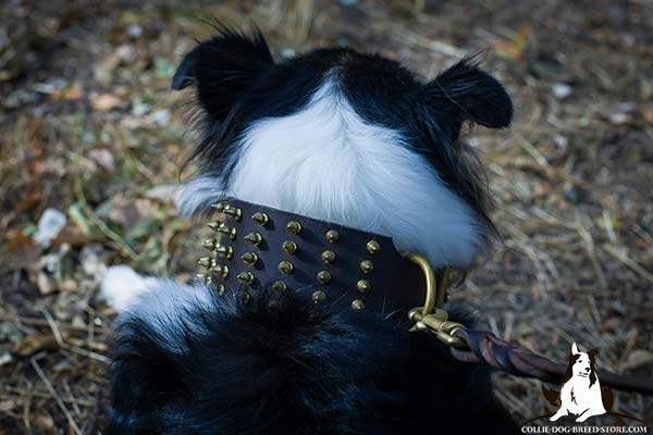 Collie leather leash with reliable hardware for improved control