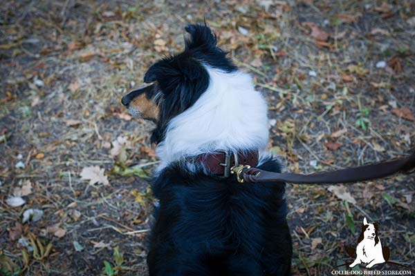 Collie leather leash of genuine materials with brass plated hardware for daily walks