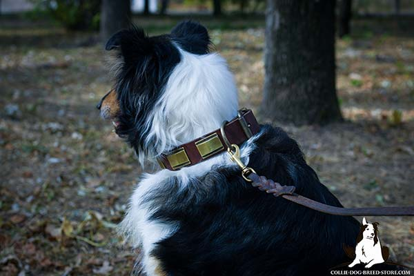 Collie leather leash with corrosion resistant hardware for daily walks