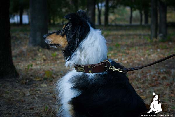 Collie leather leash with rust-resistant brass plated hardware for professional use