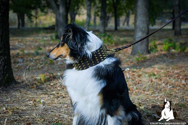 Collie leather leash of classy design with handle for daily activity