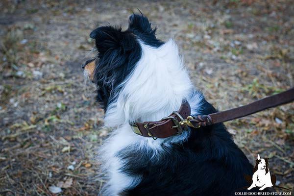 Collie leather leash with strong hardware for tracking