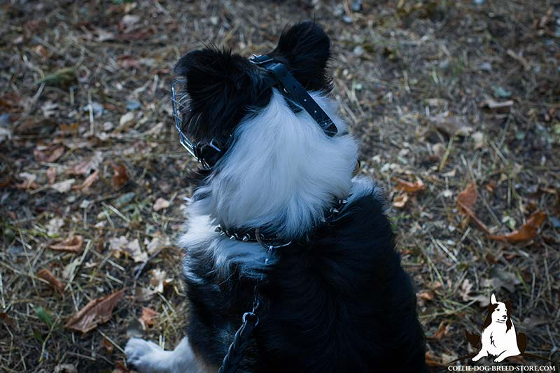 Wire Basket Collie Muzzle for Comfortable Walking and Training [M4 ...