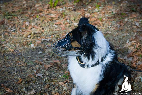Collie wire basket muzzle padded with felt with traditional buckle for walking