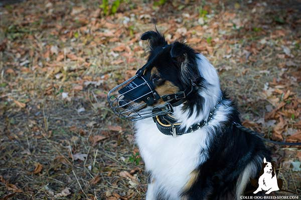 Collie wire cage muzzle ventilated with riveted fittings   for daily activity