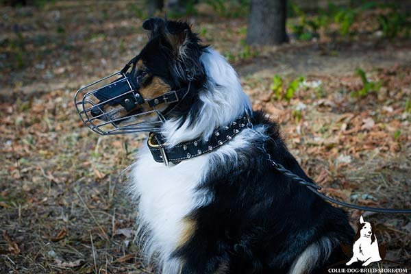 Wire cage dog muzzle for Collie for effective training