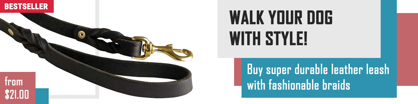 Walking Training Leather Collie Leash Braided